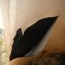 Termotanque-con-revestimiento-pintura-epoxi-levantado