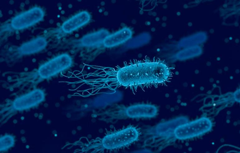 Ley 4649-D-2019 Prevención y control de Legionella